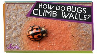 How Do Bugs Hang Upside-Down?
