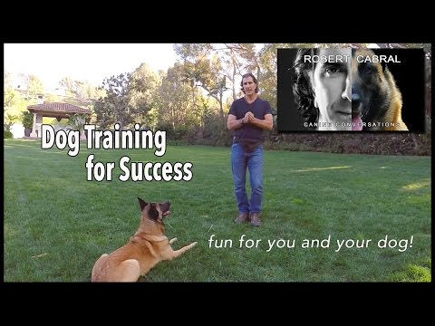 Dog Training for Success - Robert Cabral Dog Training #7