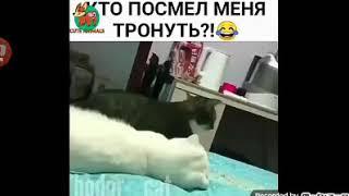 Faze comice cu animale???.