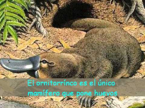 Datos curiosos video educativo wmv youtube for Animales de plastico para jardin