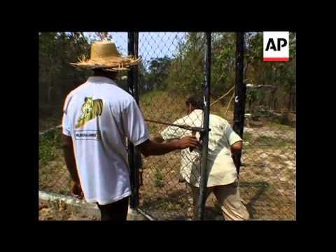 primates-under-threat-in-cambodia
