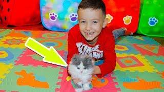 Даня СПАСАЕТ КОТЕНКА и ПРЯЧЕТ его дома от мамы! Видео для Детей