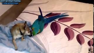Подборка видео приколов про собак и попугаев Ржака