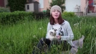 Сибирская кошка. Породоведение c Евгенией Тимоновой
