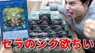 【遊戯王】シクが出るまでリンクヴレインズパック2を開けまくります!!!!!