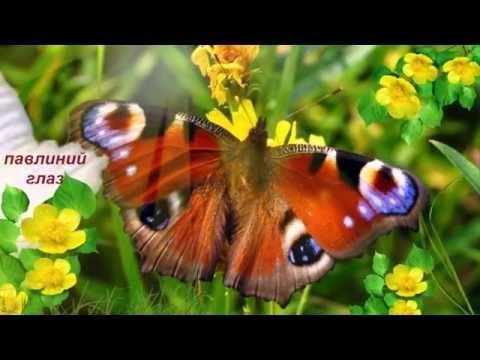 Самые красивые бабочки в мире.