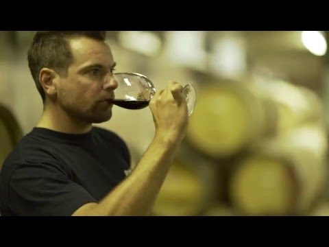 Stars shining on Cape Town Wine Guide commercial