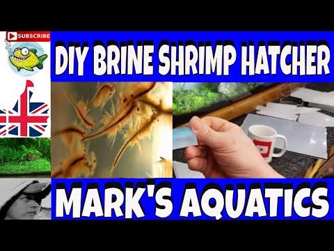 DIY BRINE SHRIMP HATCHER