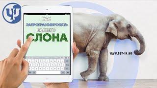 Как запрограммировать вашего слона. Ковалев С.В.