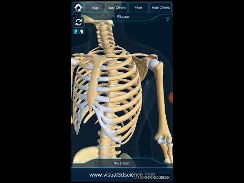 My Skeleton Anatomy Apps On Google Play