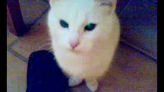 Kot mówi MAMA, Cat says mom 2