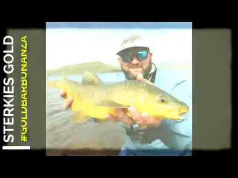 Flyfishing Sterkfontein 2018 #yellowfish #GoldBarBonanza