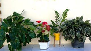 4 Tipos de Plantas que Ficam Maravilhosas Na Sombra de Sua Casa