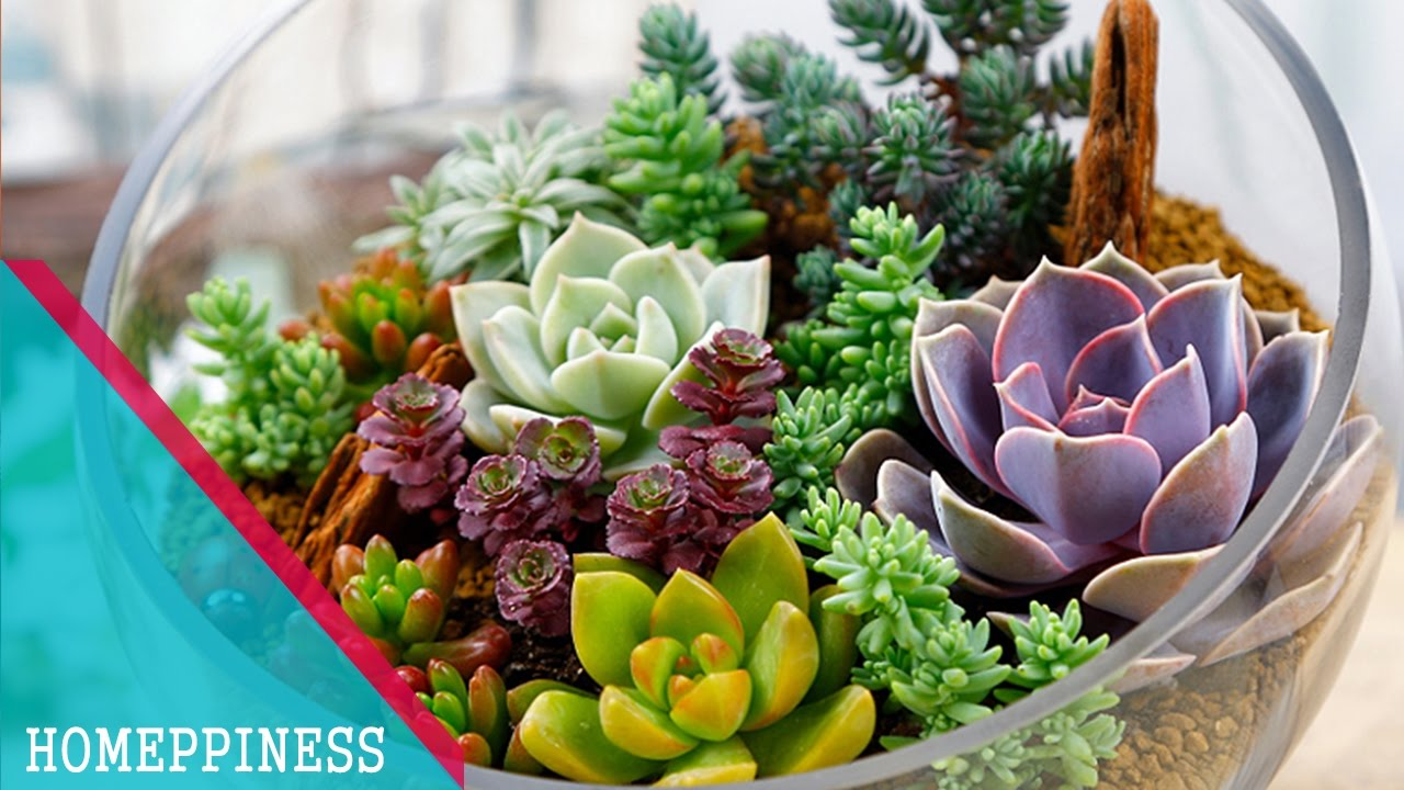 Captivating Succulents Decorating Ideas