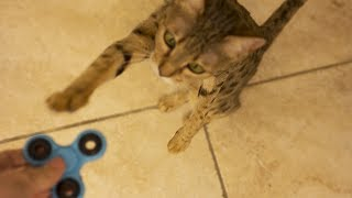 CAT LEARNS HOW TO USE FIDGET SPINNER!!