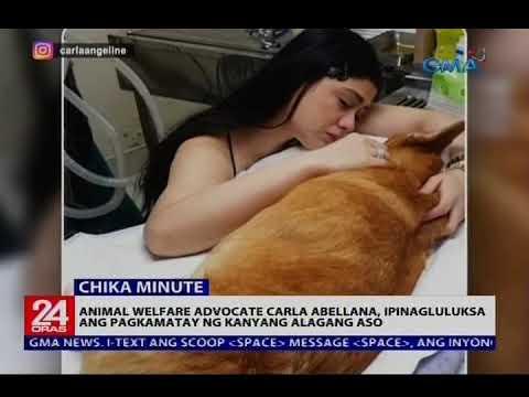 Animal welfare advocate Carla Abellana, ipinagluluksa ang  pagkamatay ng kanyang alagang aso