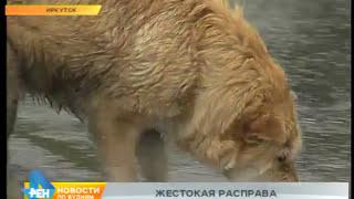 В Иркутске травят чипированных собак, которые безопасны для окружающих