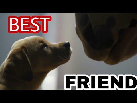 YAARA TERI YAARI KO MANIE HAI KHUDA MANA || ANIMAL FRIENDSHIP || DOG AND HORSE