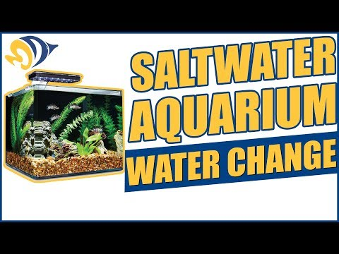 How To Perform A Saltwater Aquarium Water Change