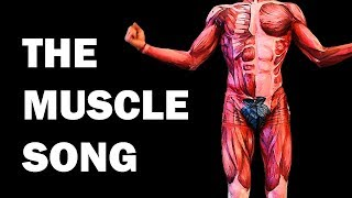 THE MUSCLES SONG (Learn in 3 Minutes!) screenshot 5