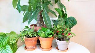 부자 만들어주는 재물과 행운이 가득한 식물! 개업, 집…