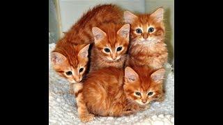 Рыжие котята-солнышки.