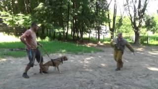 Школа охранных собак