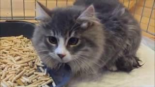 Социализация полудикого котенка-подростка. Чудеса да и только.