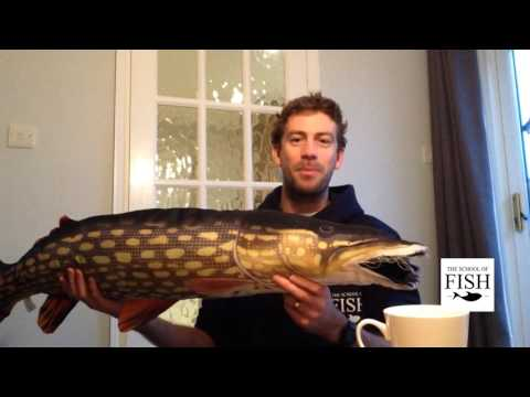 Get Back Into Angling - Porth Reflections