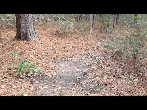 Sam Houston National Forest - Deer Scrapes - Dec 31 2014