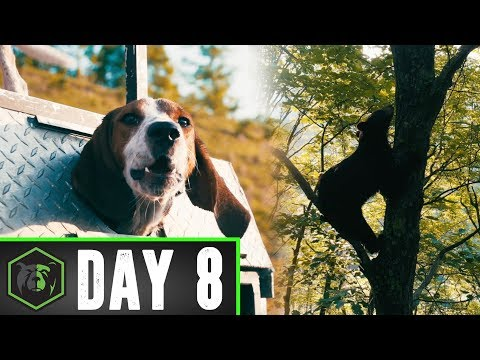 BEAR DOG TRAINING. SOUTHERN WEST VIRGINIA. DAY 8.