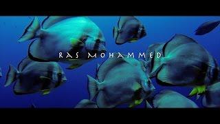 Ras Mohammed