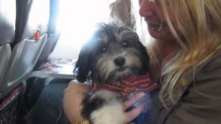 Kari On Jetstar Flight