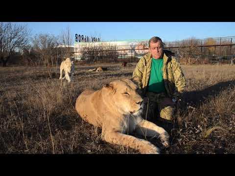 МАКСИМАЛЬНЫЙ РЕПОСТ !!! Парк львов Тайган ХОТЯТ ЗАКРЫТЬ !!!