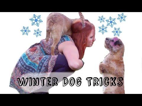 Winter Dog Tricks