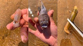 해안에서 위대하고 독하고 기이 한 해산물 잡기 65 회…