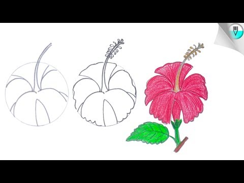 how to draw a hibiscus flower step by step (Easy)