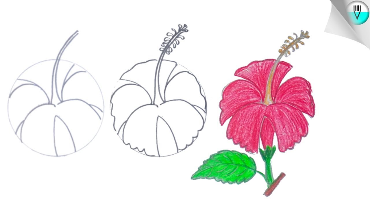 How To Draw A Hibiscus Flower Step By Step Easy Youtube
