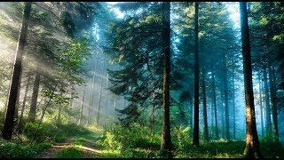 Житель Сахалина за свои деньги посадил 250 тысяч деревьев! Но власти...