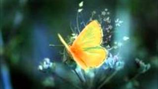 tahiti 80 puzzle yellow butterfly.