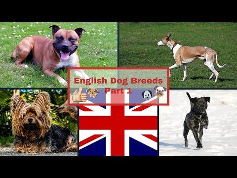 English Dog Breeds Part 1