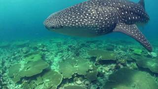Vilamendhoo Diving HD