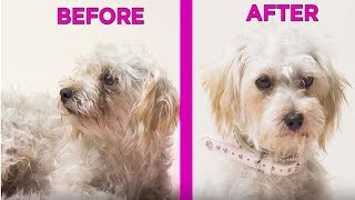 Shelter Dogs Get Makeovers