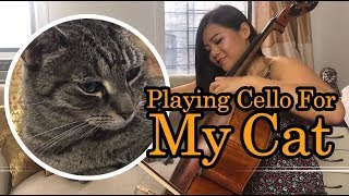 Cat Reacts to Cello Music (La Vie En Rose)
