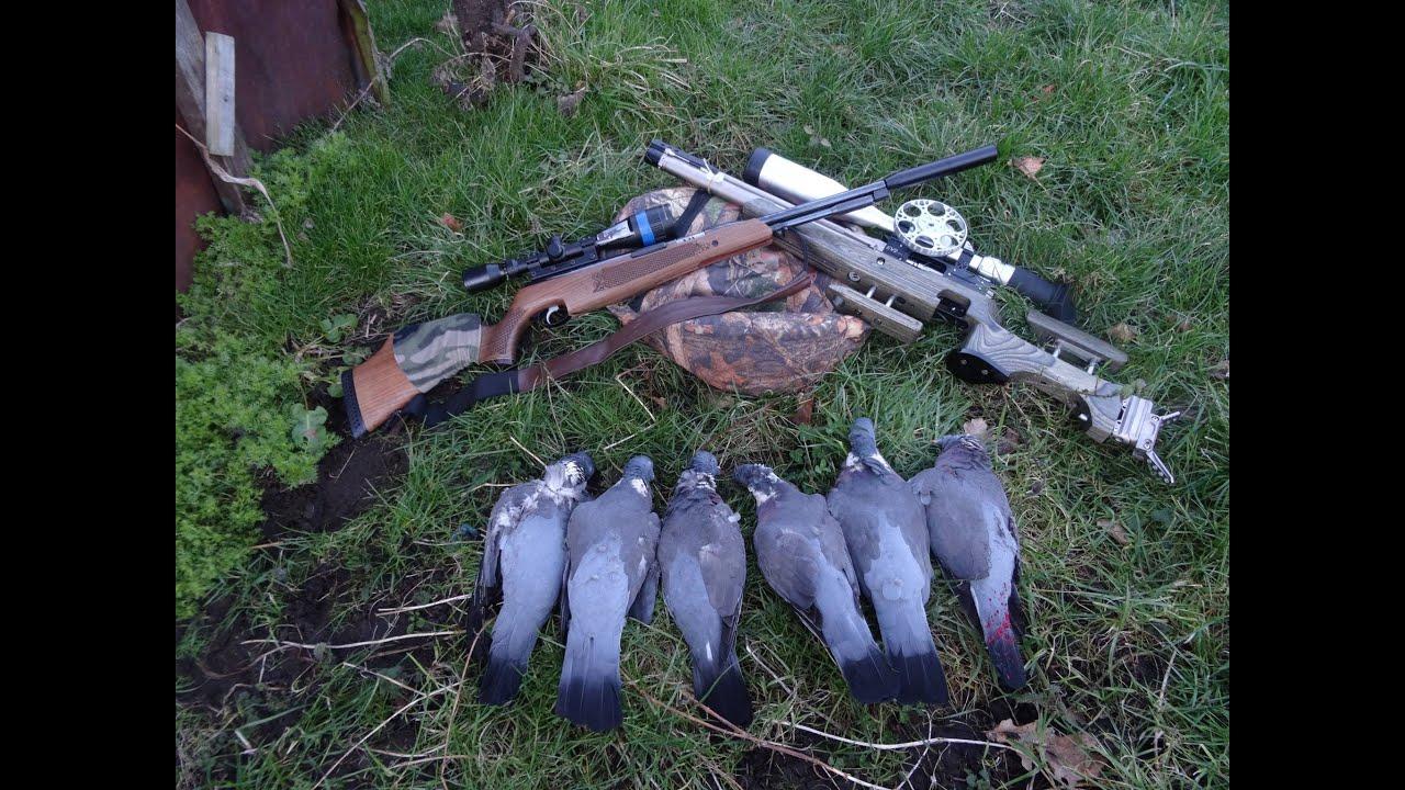 Airgun hunting birds pixshark images galleries