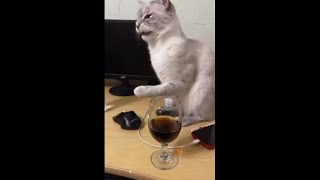 Cat Hilarious Reaction to Her First Time Trying Cola
