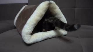 Домик - трансформер  для кошки.