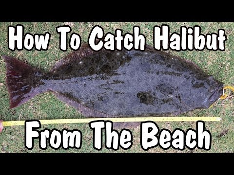 How To Catch Halibut From The Beach