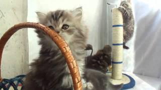 Наши любимые котята