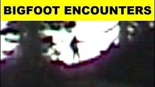 5 Credible Sightings And Encounters With Bigfoot